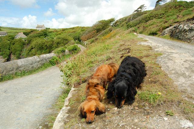 Cornish coast path at Bessy's Cove