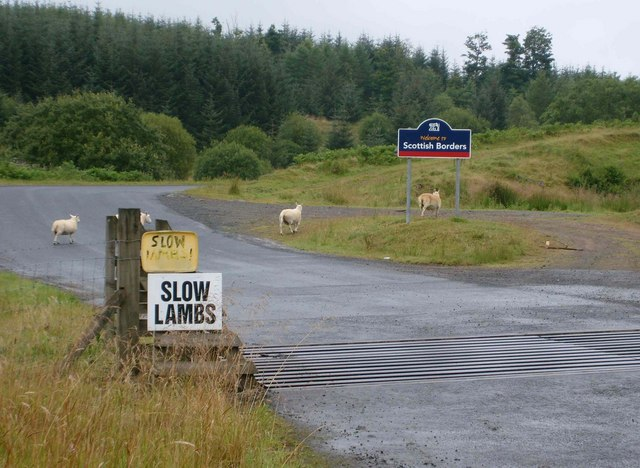 Slow lambs