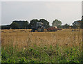 TF9722 : Baling the old way on Great Heath by Ling Plantation by Zorba the Geek