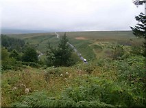 NY5083 : Moorland road above Kershope Burn by Rose and Trev Clough