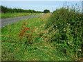 SK7376 : Deserted country lane by John Poyser
