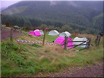 NT8912 : Tents in the morning by Newbiggin Hall Scouts