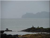 O2444 : Sea Birds with Ireland's Eye by Ian Paterson
