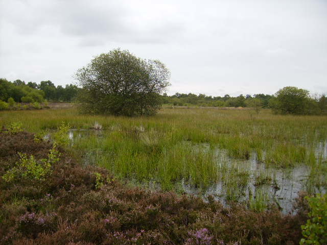 Pond on Strensall Common near White Carr