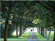 O1646 : Leafy Evening Stroll by Ian Paterson