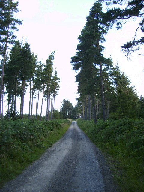Forestry road in Langdale Forest