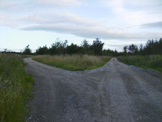 Track junction in Langdale Forest