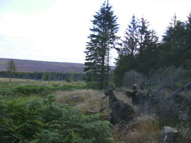Stony Rigg with the heather capped High Moor in the background