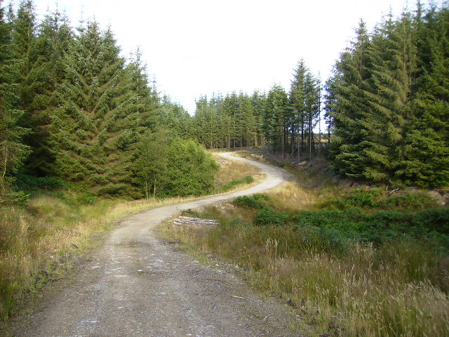 Unmapped forestry road in Langdale Forest