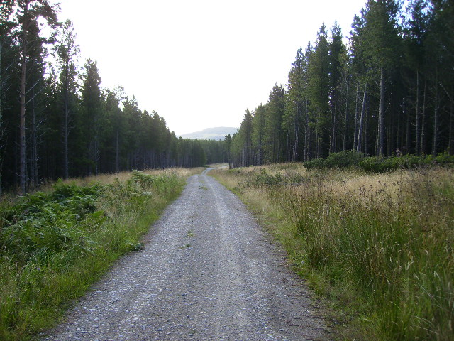 Forestry track in Langdale Forest.