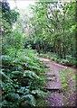 SJ9150 : Footpath in Bagnall Woods by Debbie Turner
