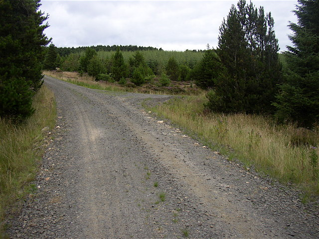 Forestry road in Harwood Forest