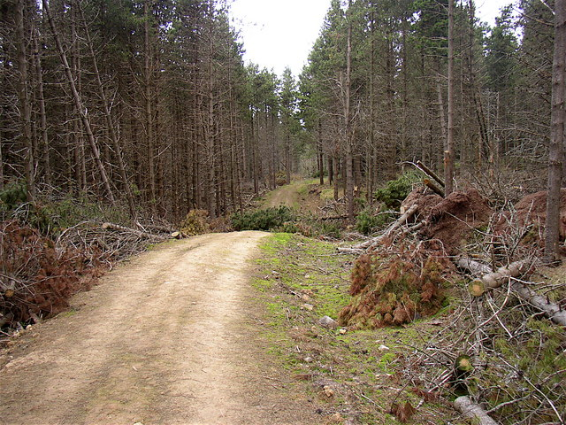 Storm damage in Harwood Forest