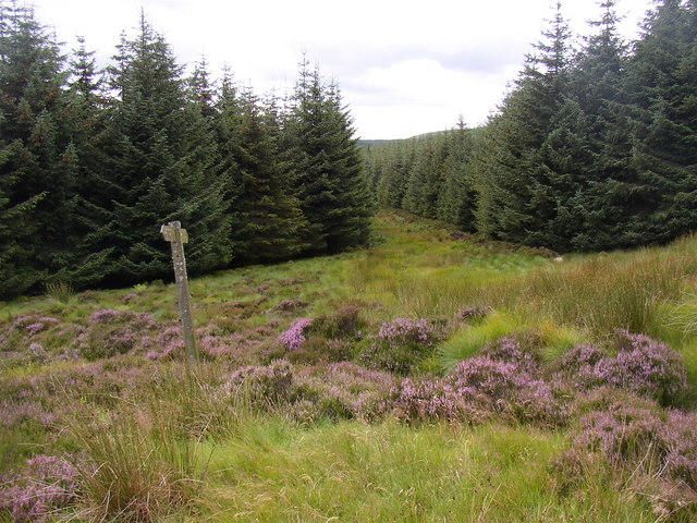 Signpost on Salters Road, Usway Forest