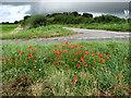 TG0240 : Field edge near junction of B1156 with Blakeney Long Lane by Evelyn Simak