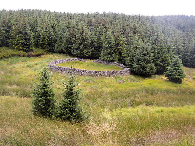 Sheepfold at Clay Burn, Usway Forest.