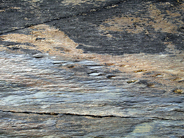 Tetrapod Trackway