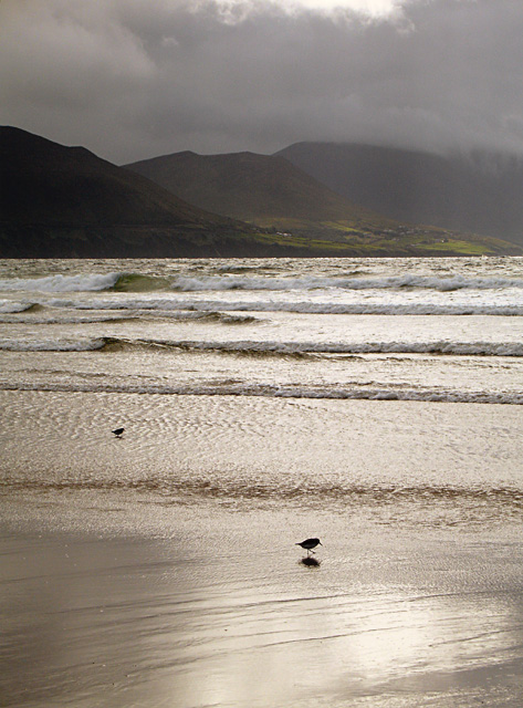 Wader on Rossbeigh Beach