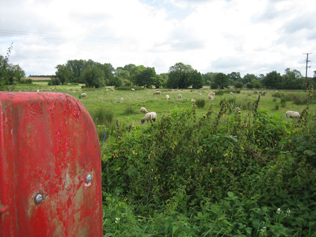 Sheep in the centre of Swannington by Zorba the Geek