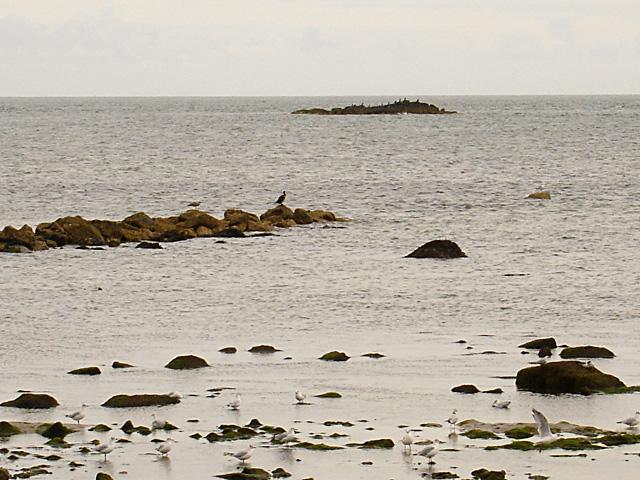 Whilkeen Rock
