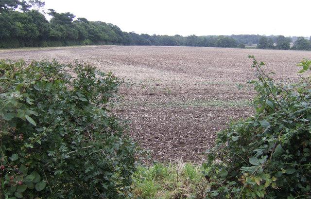 Arable land on the edge of Fazeley