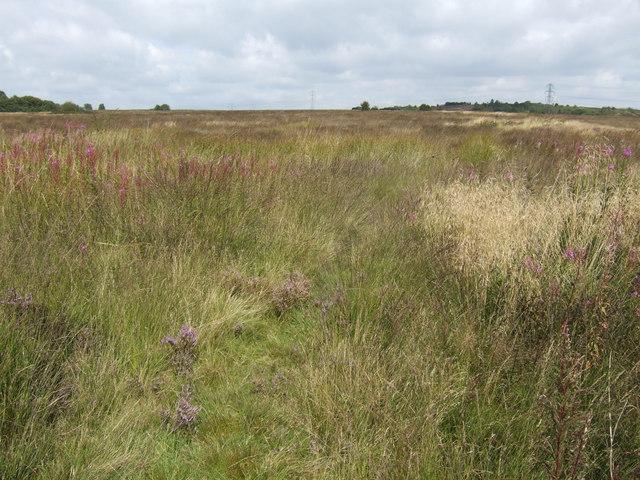 Wetley Moor