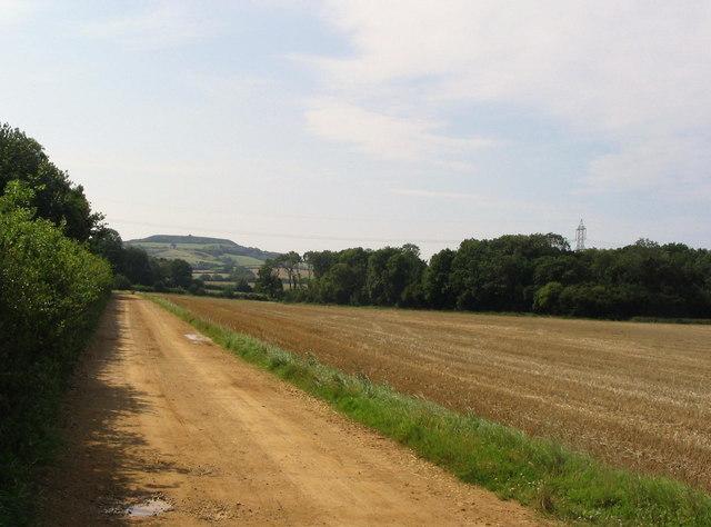 Ten Acre Copse, near Uploders.