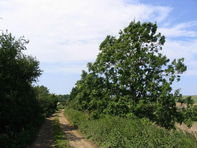 Dismantled railway line near Mappercombe