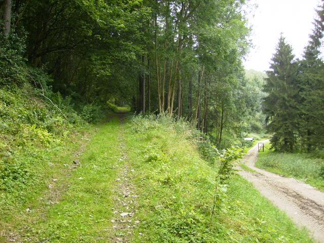 Track junction in Beckdale Wood