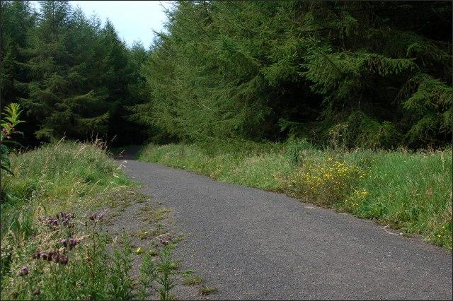 Ballyboley forest near Larne (8)