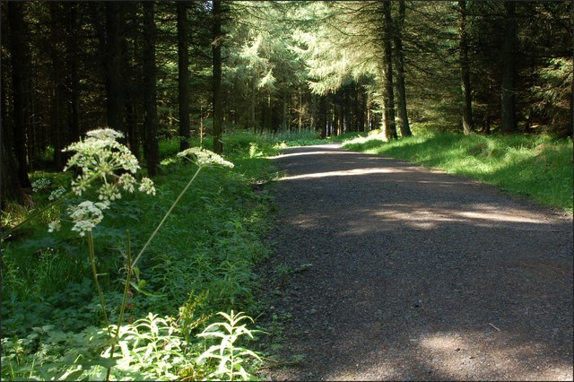 Ballyboley forest near Larne (9)