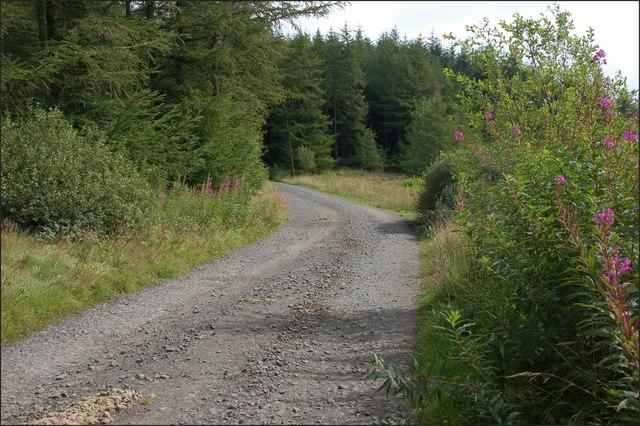 Ballyboley forest near Larne (10)