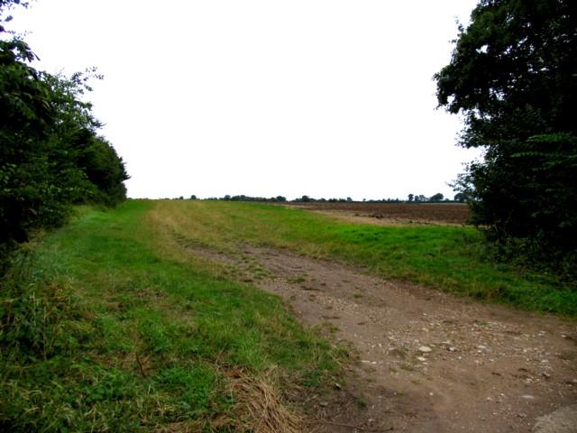 Fields near Great Bardfield