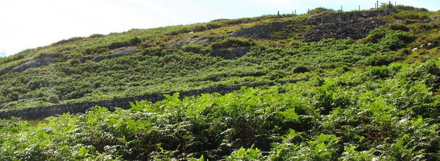 Visible amongst the bracken - a part of the tramway embankment and, on the slope above, some trial levels