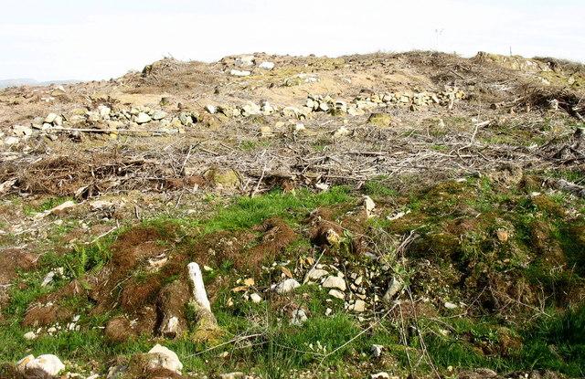 A clear fell desert at Ffridd Lwyd
