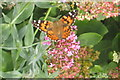 TM0733 : Painted Lady butterfly by M J Richardson