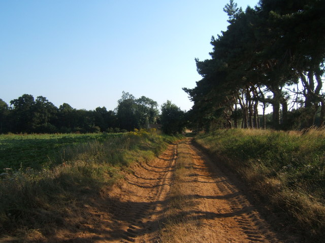 Track near Shottisham