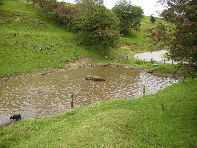 Duck pond at Warren Farm