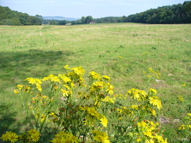 Grassland by Deerleap Wood