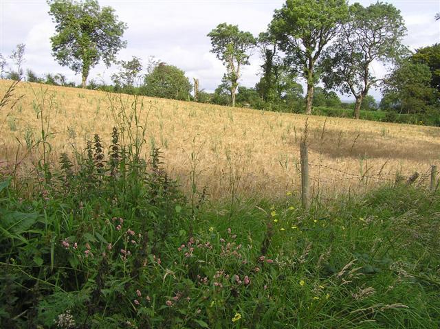 Cranny Hill