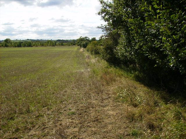 Field margin after harvesting west of Primrose Farm