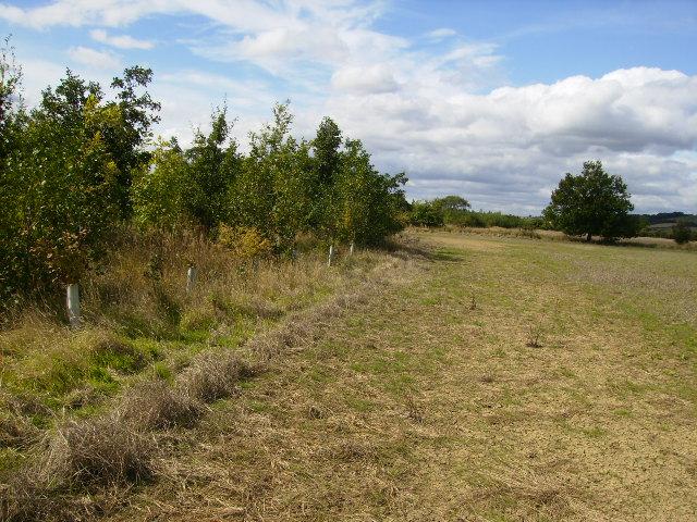 Conservation area near field boundary