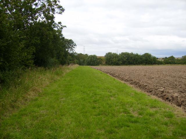 Wild field margin which also serves as a public footpath