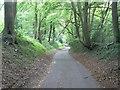 SU6515 : Hambledon: Glidden Lane by Chris Downer