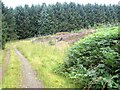 NY9793 : Forest colours, Harwood Forest by Oliver Dixon