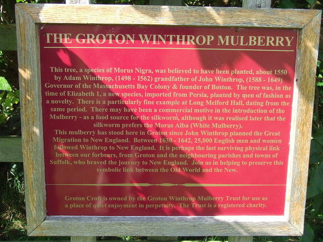 The Groton Winthrop Mulberry