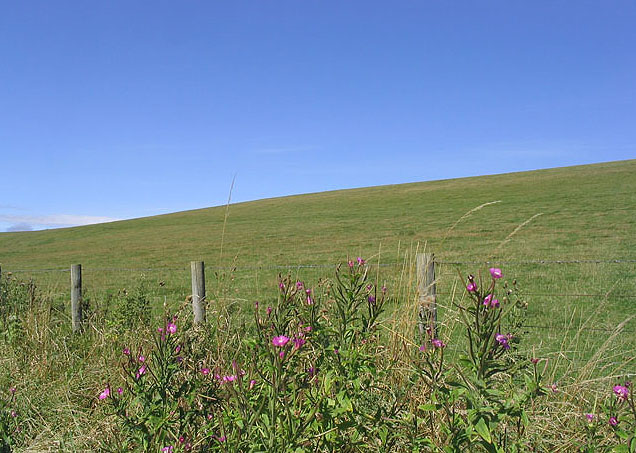 Hill grazing west of Great Ryle