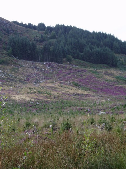 Heather on the eastern slopes of Shaw Hill
