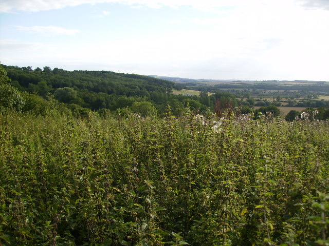 View from Scagglethorpe Brow