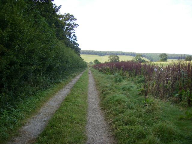 Track running alongside Becks Plantation